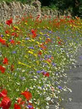 Wild Flower - Cornfield Annual Flower Special Mix 500g Seed
