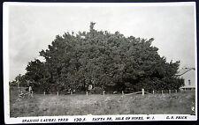 WEST INDIES ~ CUBA ~ 1900's SPANISH LAUREL TREE~ SANTA FE ~ ISLES OF PINES  RPPC
