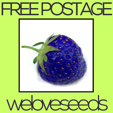 LOCAL AUSSIE STOCK - Blue Strawberry, Fruit Tree Plant Seeds ~10x FREE SHIPPING
