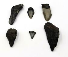 Megalodon Teeth Lot of 6 Fossils w/6 info cards Shark #15703 17o