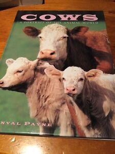 Cows by Danyal Payne (Hardback, 1999)