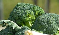 "Broccoli ""De Cicco"" Italian Heirloom 1000+ Organic Seeds NON-GMO + Gift COMB S/H"