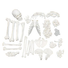 MonMed | Medical Skeleton Model Life Size Disarticulated Human Skeleton Model