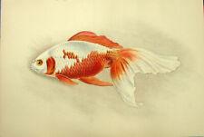Japan Watonai Twin Tailed Aquarium Pond Fancy Goldfish, 1909 Art Print Engraving