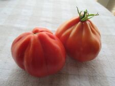 Tomato Granny`s Throwing (40seeds) - Organic Heirloom seeds by Life-Force Seeds