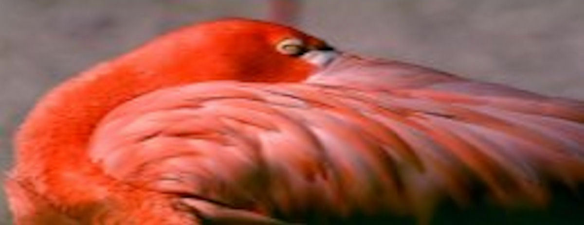 Eclectic Flamingo