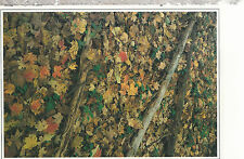 Fallen Leaves  McCormick's Creek State Park    Indiana      Chrome  Postcard 267