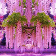 30pcs Purple Wisteria Flower Seeds Perennial Climbing Plants Bonsai Garden Decor