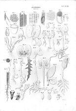 Stampa antica BOTANICA dettagli di anatomia delle foglie e radici 1848 Old print