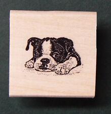 "Miniature boston terrier rubber stamp WM 1x0.7""  P24"