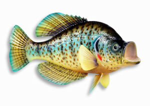 """Hand Painted 15"""" Crappie Game Fish Replica Wall Mount Decor Plaque Sculpture 81"""