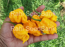 Carolina Reaper Yellow Chilli - 5 Australian Grown Seeds - World's Hottest Chili