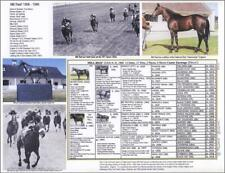 British Race DerbyHorse MILL REEF picture photo pedigree Broke leg and recovered