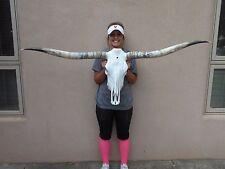 """STEER SKULL LONG HORNS  4'  11""""  HORN LONGHORN bull COW HEAD"""