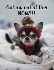 METAL FRIDGE MAGNET Get Me Out Of This Now Tea Cup Chihuahua Dog Humor