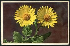 Posted 1951. View of Senecio Doronicum in Flower. Postmark Wembley