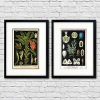 Vintage Botanical Scientific Illustration Print Size A3 Luxury Satin Paper No.1