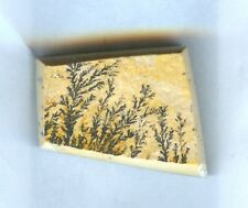 #1-5 All Natural Dendritic Fossil Cabochon For Jewelry