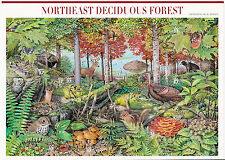 Nature In America USPS Stamps Sheet MNH Scott 3899 Northeast Decid. Forest 10x37