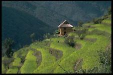 477099 Terraced Farming In The Foothills Of Katmandu Nepal A4 Photo Print