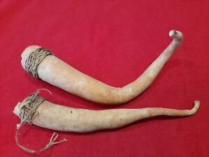 2 Vintage Penis Gourds, Papua /New Guinea. Two Penis Sheaths worn by New Guinea