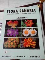 Carpeta número 1 de la colección Flora Canaria, José Alfredo Pérez Martín