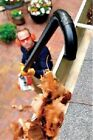 Genuine Stihl Gutter Cleaning Attachment Kit for Leaf Blower: 4241-007-1003. New