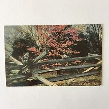 Cedar Fence Unposted Postcard