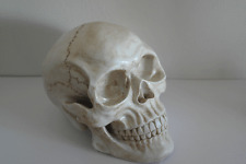 Choose Any Colour - Anatomical Human Skull Table Decoration Horror Skeleton Art
