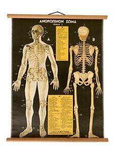 Original Anatomy Pull Down Chart, Vintage Human Body Anatomy, Medical School Map