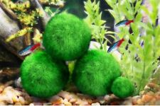 4 LUFFY Marimo Moss Ball - Beautiful Aquarium Ornament for Betta Fish Tank Plant