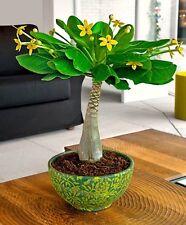 Hawaiian Palm Plant Tree Reception Living Bedroom Home House Decor Decoration