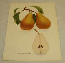 1921 Antique Print/LEON LECLERC (VAN MONS)/From Pears of New York, by Hedrick