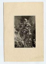 Foto 1929 Hagebutten im Schnee Hagebutte rose hip - Rückseite beachten !