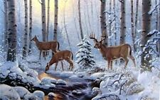 """Ervin Molnar /""""Startled/' Deer Buck Art Print Signed and Numbered  21.5/"""" x 13.5/"""""""