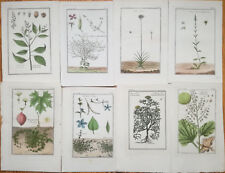 Garsault: Botanical Engravings Lot of 8 Prints Botany (J) - 1767