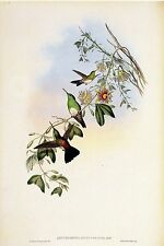 "1990 Vintage HUMMINGBIRD #319 ""WHITE BREASTED ERYTHRONOTE"" GOULD Art Lithograph"