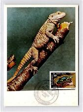 Haute-Volta MK 1966 fauna Reptile Agame Carte Maximum Card MC cm d9960