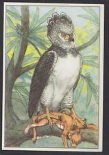 Harpy eagle bird  nice vintage belgian Ad trading card