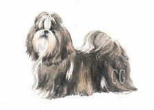 Paintings/Posters/Prints Shih Tzu Collectables