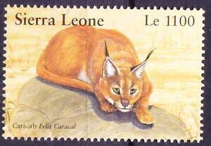Sierra Leone 2002 MNH, Caracals, Wildcats, Wild Animals