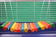 Grand Swinging étagère chinchilla rat Degu Parrot Cage