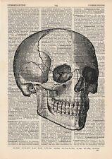 Anatomical droit Face Crâne Dictionnaire Copie d'art, Anatomie médicale Vintage