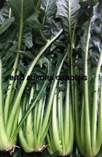 200 Italian Chicory Cicoria Catalogna Dandelion Seeds Heirloom NON-GMO