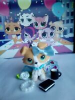 lps littlest pet shop collie dog  with clothes and accessories