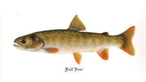 12 Washington Native Trout & Salmon Prints by Joseph Tomelleri