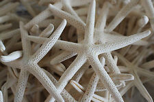 """White Starfish Pencil 1 Dozen approx 2""""+ Great for weddings or party"""