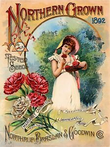 1892 Pink Carnations Vintage Flowers Seed Packet Catalogue Advertisement Poster