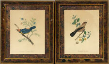"""2- lithographs, prints, birds / branch, APP, NYC, faux finish frame,13""""t, c1940"""