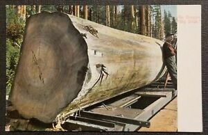 Vintage Colorized Photo Postcard Huge Tree Oregon